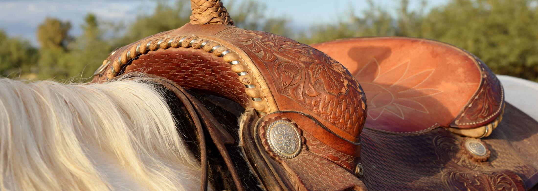equineslider4