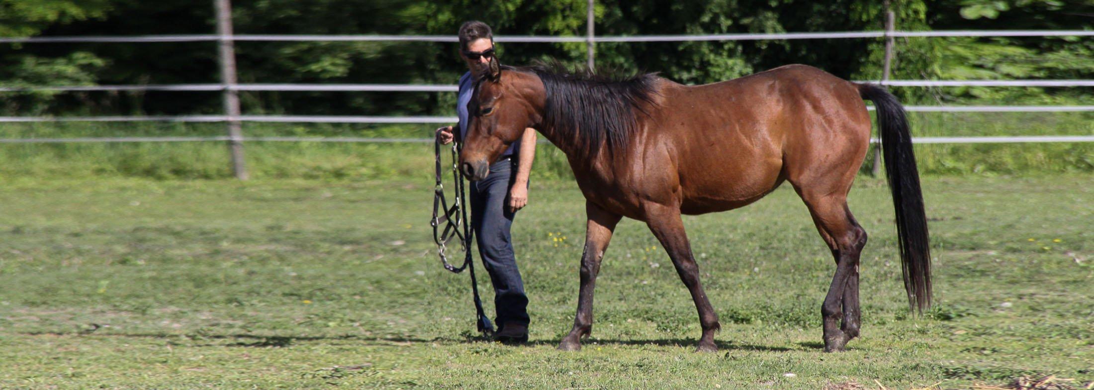 horseslider