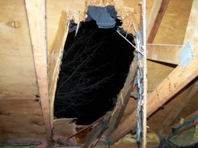 normal Hole in roof that horse fell through1 (2)
